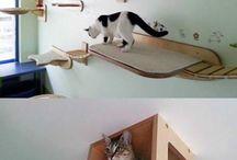Dla kotow