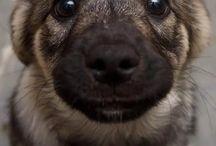 *DOGS*HUNDE*