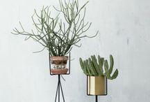 Unique Planters / by Courtney Carnell | Mint Floral Studio