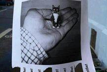Katzensachen