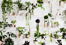 indoor plants...