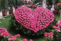Decoração com flores / Diversas ideias, sugestões e tutoriais com flores