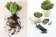 vetplante
