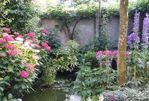 Our Garden At Home / Garden