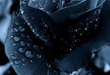 flori gotice
