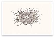 Bird nest drawings