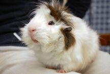 Adoptable Small Animals