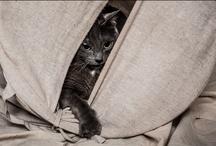 Kala The Cat