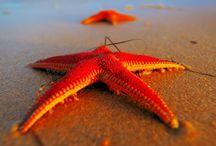Red Sea Riviera