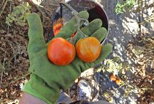 On the Farm / Farm landscapes, fruits and vegetables and farmworkers