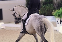 Horses / I will have one someday