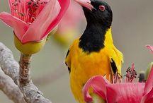 Birds Around the world! / by Sonia Augeri