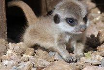 Baby animals, aw