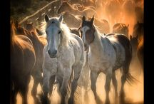 Photography: What I Love / Western Photography