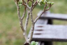 pozsgás növények