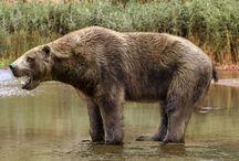 Biodiversity + bears