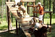 Goats & stuff