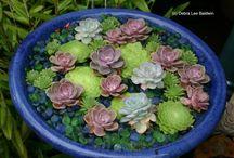 Bahçe Çiçekleri kaktüsler