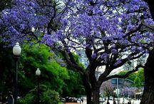 Che Buenos Aires: sos tan linda!
