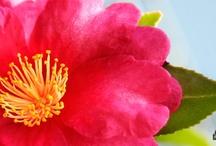 Bushnell Plants / Bushnell Gardens Nursery Plants