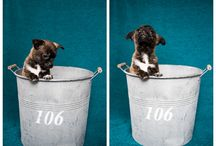 Newborn Puppy Photography