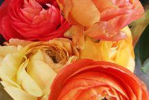 flowers / by līga sīle
