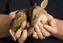 stoere schattige dieren