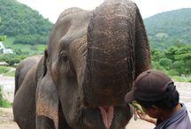 The Elephant Nature Park, Thailand