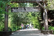 Marin County Places We Love