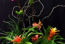 Tropical Plants / Tropical and Exotic Flowering Plants