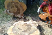 Arborystyka