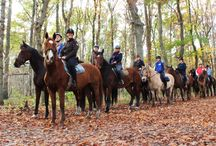 Vind je Buitenrit - Trail rides Forest