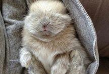 Hoppl, the bunny