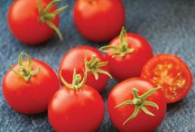 New from Jung Seeds and Plants / Look what's new from our NGB member Jung Seeds and Plants