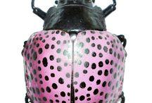 skalbaggar / bugs
