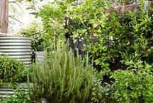 Herb (happy place) garden