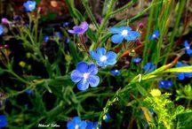 Цветочки.Синий,голубой