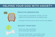 Pets-Animals Infographics