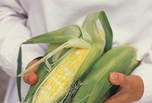 Potager : maïs
