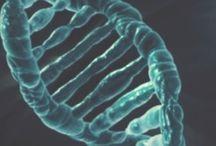 Mutations des genes
