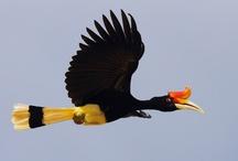 Birds hornbills 2