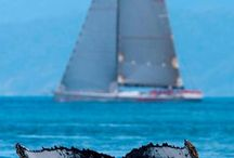 Sailing Australia's East Coast / Sailing voyages