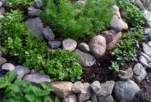 garden/outside / by Kira Tull