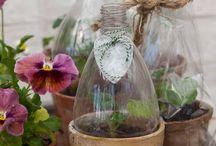 crear invernaderos para semillas