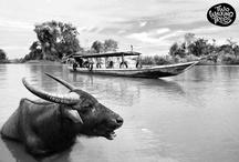 Fotografía / Viajar es nuestra pasión y la fotografía también! Visitamos lugares increíbles en Tailandia, Laos, Camboya, Australia, Nueva Zelanda, Marruecos, EE.UU. En este álbum se pueden ver algunas de ellas.