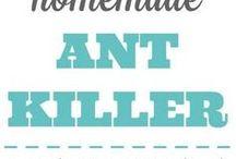 Ann's ants