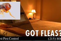 Bed Bugs Treatment Philadelphia / Pest Control Philadelphia, Bed Bugs Exterminator Philadelphia, Bed Bugs Treatment Philadelphia, Pest Control Service Philadelphia
