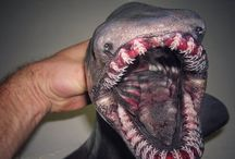 Deep Sea Fisherman Shares The Terrifying Alien He Catches In The Ocean