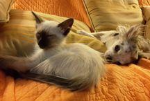 Chats et chiens / Chats et chiens ensemble