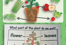 4 sci plant growth and change /  Grade 4 Alberta curriculum